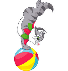 cat on a ball vector image