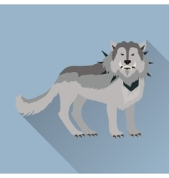 Grey wolf in collar vector