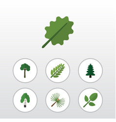 Flat icon bio set of alder leaves evergreen and vector