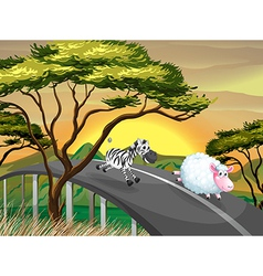 A zebra and a sheep running at the road vector