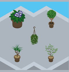 isometric flower set of tree fern blossom and vector image