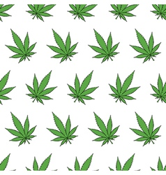 Cannabis leafs vector image