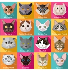 Set of flat popular breeds of cats icons vector