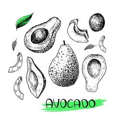 Avocado set hand-drawn in sketch style vector