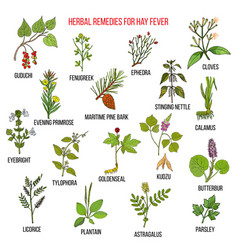 best herbal remedies for hay fever vector image