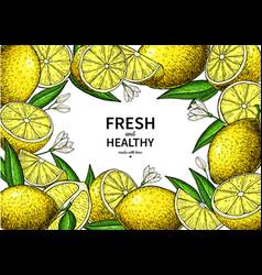 lemon label drawing citrus fruit frame vector image