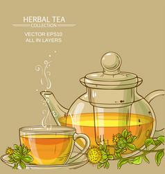 safflower tea background vector image