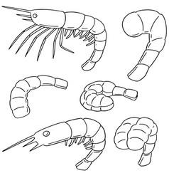 Set of shrimp vector