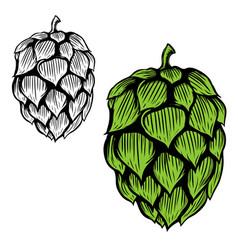 Beer hop on white background design element vector