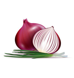 fresh whole and sliced red onion bulbs with vector image