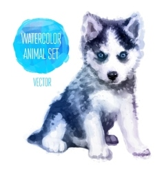 Huskies hand painted watercolor vector