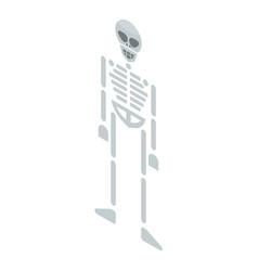 skeleton icon isometric style vector image