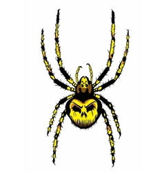 spider with skull on the body vector image