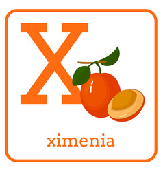 an alphabet with cute fruits letter x ximenia vector image