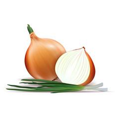 Fresh whole and sliced yellow onion bulbs vector