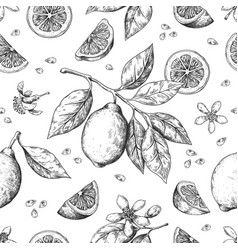 hand drawn lemon pattern vintage seamless texture vector image