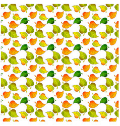 leaves of a birch pattern vector image