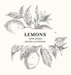 lemon hand drawn frame layout vector image