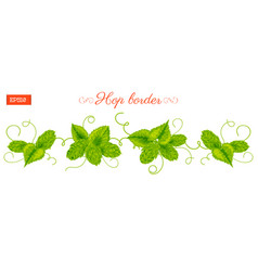 border of leaves and cones of hops plant isolated vector image