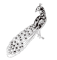 hand drawing peacock vector image