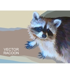 racoon made of polygons Eps 10 vector image