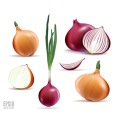 Collection of onions with slices isolated vector