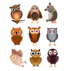 set cute different owl bird with colorful vector image
