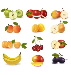 group with different fruits vector image