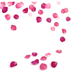 falling petals of pink roses vector image vector image