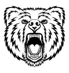 Growling bear vector image vector image