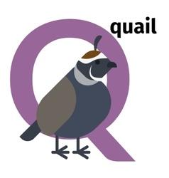 English animals zoo alphabet letter q vector
