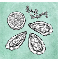 Oysters with lemon and thyme vector