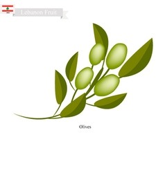 Ripe olive a popular fruit in lebanon vector