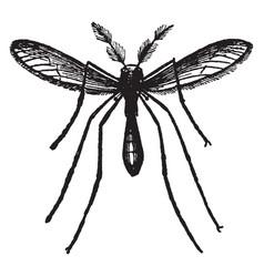 The gnat vintage vector