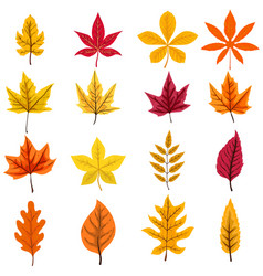 set of autumn leaves isolated on white background vector image vector image