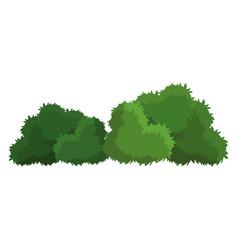 Bush green natural foliage image vector