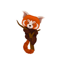 Chinese red panda hanging on a tree branch cute vector