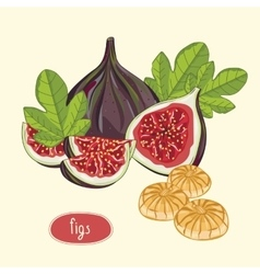 Figs fruits isolated on light background vector image