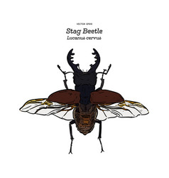 stag beetle hand draw sketch vector image