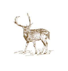 vintage style engraved hand drawn deer vector image