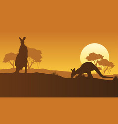 on the hill kangaroo scenery silhouettes vector image