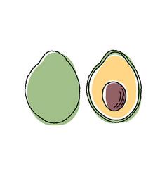 Avocado slice hand drawn tropical summer fruit vector