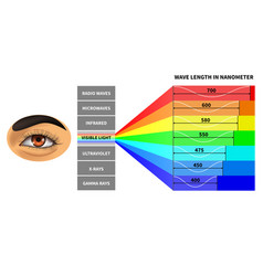 visible light spectrum color waves length vector image