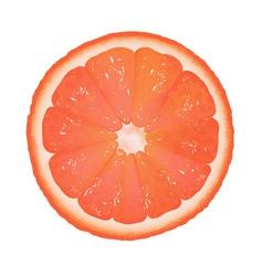 Grapefruit slice vector image vector image