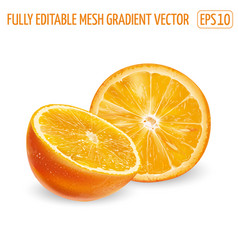 Half and round orange slice on a white background vector