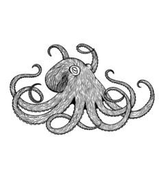 octopus line art style Design for t-shirt posters vector image