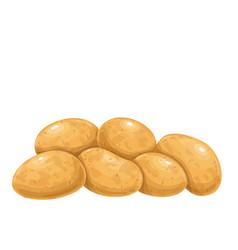 Pile potatoes vector