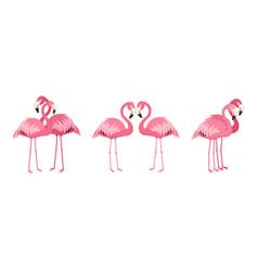 set loving couples pink flamingos vector image