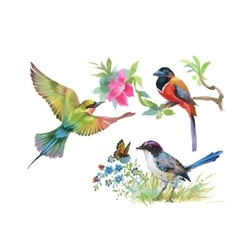 Watercolor colorful Birds and butterfly with vector image