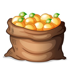 A sack of oranges vector image